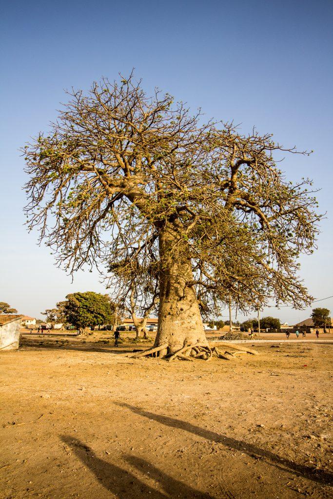 Gambia_2019_12 (1 von 1)